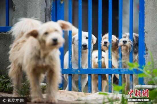资料图:流浪狗。(图片来源:视觉中国)