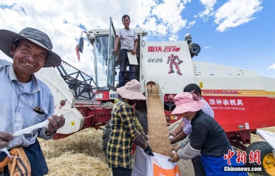 资料图:村民将收割机收割的小麦装袋。中新社记者 何蓬磊 摄