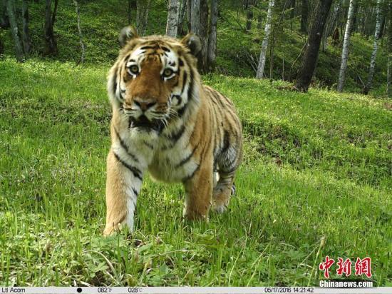 2019虎豹跨境保护国际研讨会在哈尔滨召开