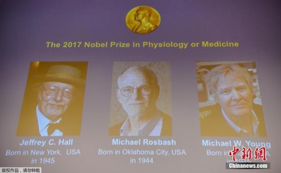 当地时间10月2日中午,2017年诺贝尔生理学或医学奖揭晓,杰弗瑞?霍尔、迈克尔?罗斯巴什和迈克尔?杨三位科学家分享奖项。