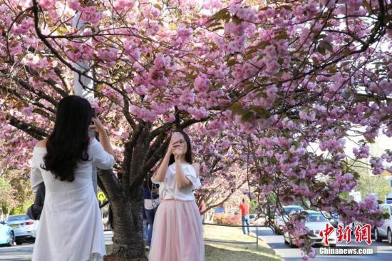 位于南半球的悉尼进入春季,到处鲜花盛开。10月2日,适逢新州劳动节。悉尼市民纷纷来到蓝山劳拉小镇,踏青赏花。正在这里举行的劳拉花园节,始于1965年,今年共有11座花园对外开放,所得门票收入将捐给医院。中新社记者 陶社兰 摄