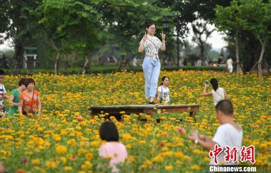 图为游客在花丛中拍照留念。 吕明 摄