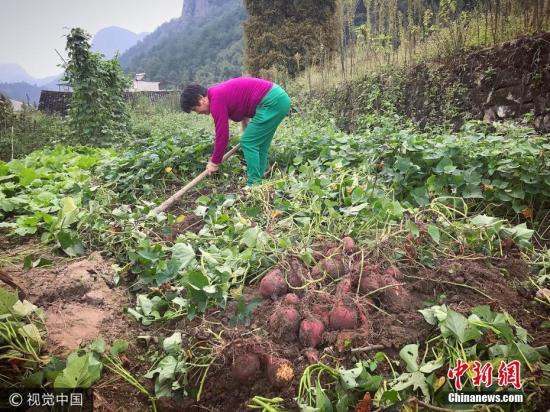 资料图:农村土地。 图片来源:视觉中国