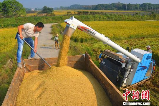 资料图:南京高淳农田丰收忙收割。 高晓平 摄