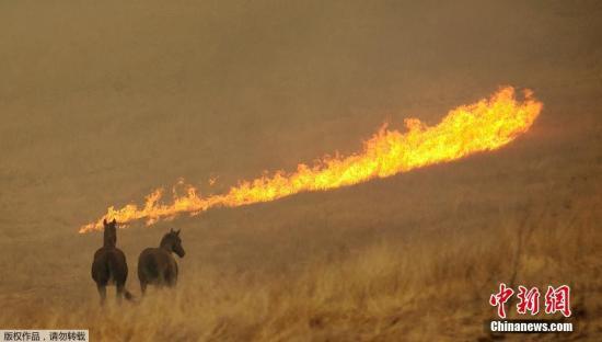 截止9日,山火的数量已经上升到15起,其中一起位于南加州。