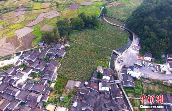 资料图:俯瞰航拍江西婺源田园上的进士村――严田古村,这里从宋自清出了共二十七名进士。刘占昆 摄
