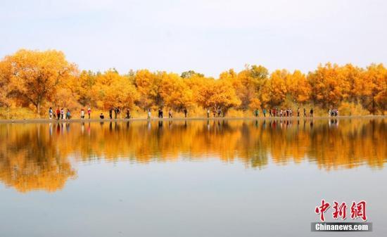 金塔沙漠胡杨林位于甘肃金塔县城以西的潮湖林场,为三北防护林体系的一部分朱希彬 摄