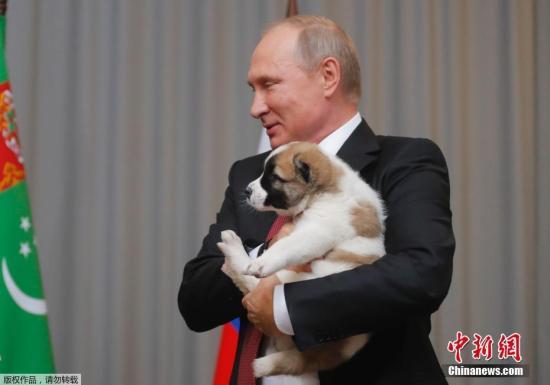 资料图:爱狗的普京。