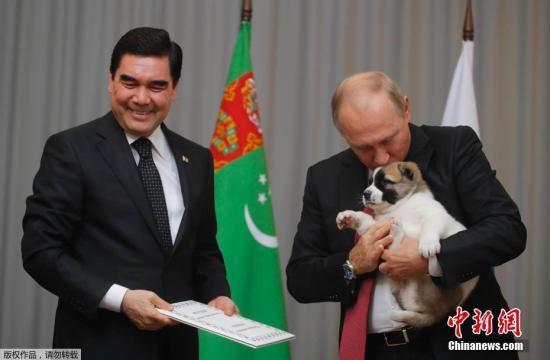 资料图:今年10月11日,普京与土库曼斯坦总统库尔班古力?别尔德穆哈梅多夫会面,获赠土库曼斯坦特有的阿拉拜犬。