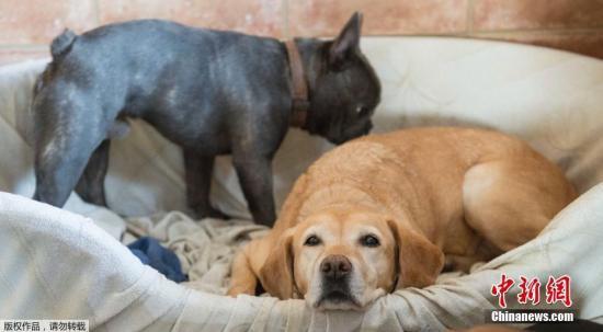 每天至少遛狗两次?德国养狗新规引发争议讨论(图)
