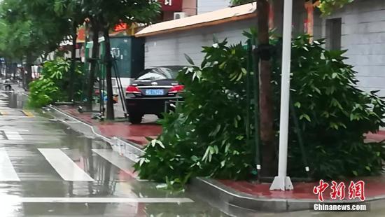"""记者从湛江市三防部门了解到,由于防御措施得当,加上强台风""""卡努""""在登陆前已减弱为强热带风暴,遭受台风正面袭击的徐闻县没有受到严重破坏,台风所造成的经济损失正在全面统计中。图为台风过后,记者在湛江市区巡街,只见到几棵被风吹倒的小树。梁盛 摄"""