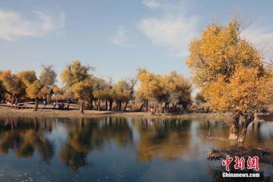 资料图:内蒙古胡杨林。 中新社记者 任海霞 摄