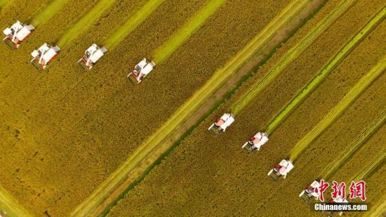 國家糧食局:糧食工作將突出六大重點強化六個支撐
