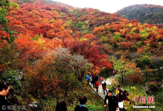 市民观赏红叶。 李文明 摄 图片来源:视觉中国