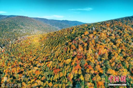 资料图:吉林省长白山林区,老白山风景区茂密秋季森林林海,五彩山林风景。 图片来源:视觉中国