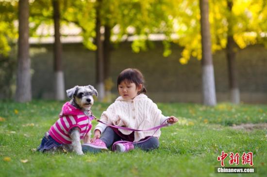 资料图:一位小女孩和她的宠物犬玩耍。<a target='_blank' href='http://www.chinanews.com/'>中新社</a>记者 贾天勇 摄