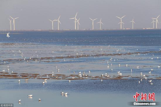 资料图:滨海湿地。图片来源:视觉中国