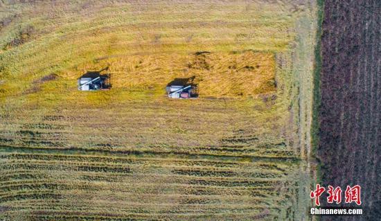 资料图:晚稻收获季,大型农业机械忙碌于田园作业,处处呈现一派繁忙丰收景象。赵春亮 摄