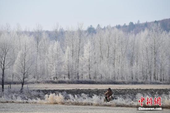 资料图为黑龙江上游呼玛江段两岸雾凇美景。中新社发 周长平 摄
