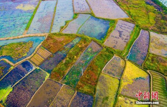 农田里的各色农作物,色彩斑斓,交相辉映。 欧阳常海 摄