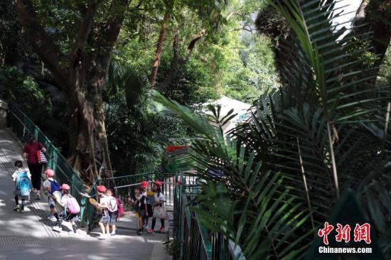 资料图:香港公园。中新社记者 洪少葵 摄