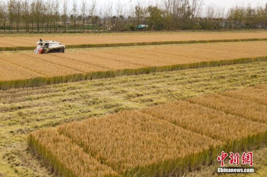 粮食局:加大监查力度 严禁不符安全标准粮食流入市场