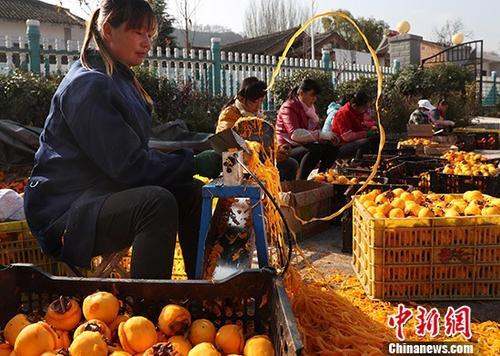 资料图:柿子深加工助力陕西陇县范家营村脱贫。中新社记者 宋吉河 摄
