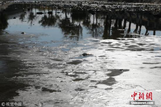 11月14日,北京门头沟区三家店附近,永定河引水渠水面结冰。据现场观察,这处水面为新近结冰,冰层仅几毫米,部分水面尚未冻结,水下还有金鱼游动。宋佳音 摄 图片来源:视觉中国