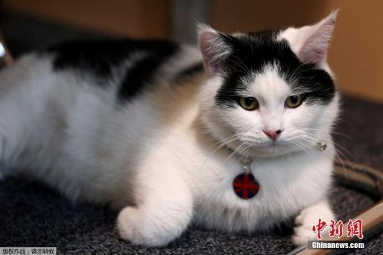 """资料图:英国""""外交猫""""劳伦斯。"""