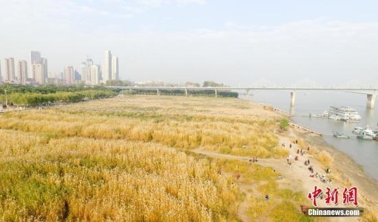 资料图:市民在武汉汉口江滩上游赏。 中新社记者 张畅 摄