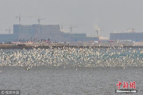 资料图:山东省青岛市胶州湾湿地。 王海滨 摄 图片来源:视觉中国