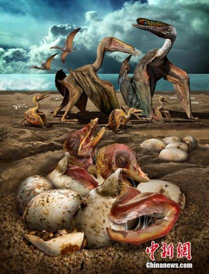 12月1日,中国科学院古脊椎动物与古人类研究所与新疆哈密市人民政府在哈密市召开新闻发布会,对十余年野外科考工作进行成果发布:大量3D翼龙蛋和胚胎化石在哈密发现,这也是全球首次发现3D翼龙胚胎。