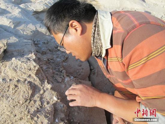 资料图:新疆发现数百枚3D翼龙蛋与胚胎化石