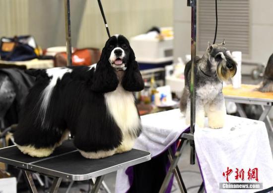 港媒称中国人日益宠溺宠物 宠物经济带热相关产业