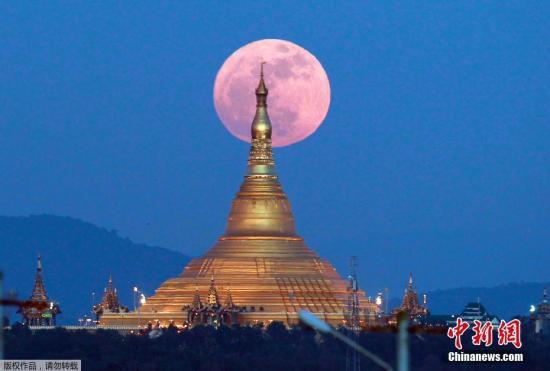 """材料图:缅甸内比皆欧巴达蒂佛塔旁降起的""""超等月""""。"""