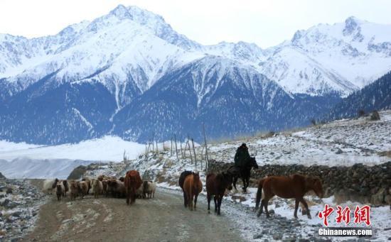 资料图:新疆昭苏县的牧民赶着牲畜转往冬季牧场。李文武 摄