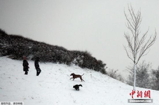 当地时间12月10日,德国多特蒙德迎来大雪,人们出门遛狗,小狗在雪地里奔跑。