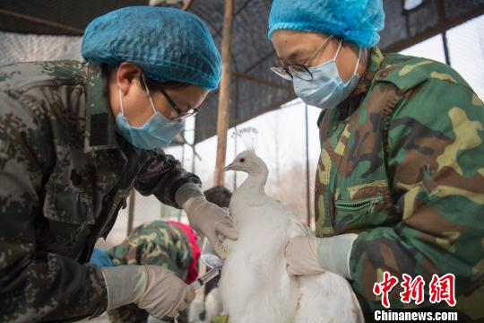 资料图:动物检疫站的工作人员为动物注射疫苗。 韦亮 摄