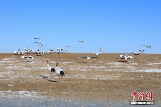 资料图:扎龙自然保护区。中新社记者 于琨 摄