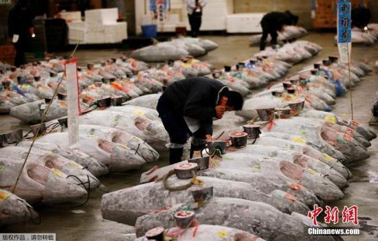 资料图;日本筑地鱼市。