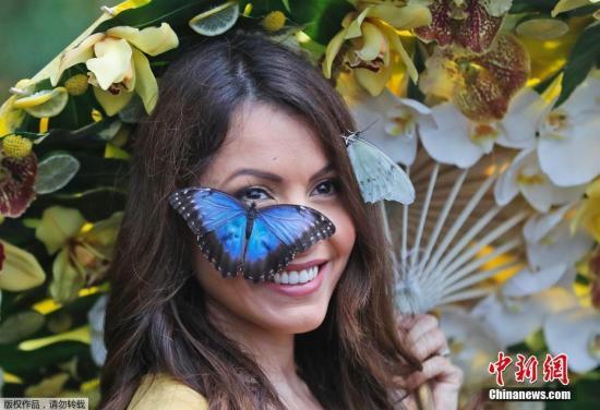 当地时间1月12日,英国伦敦西郊萨里郡威斯利花园内模特Jessie的身上停着许多美丽的蝴蝶。据了解,今年,威斯利花园的蝴蝶展将迎来超过50种充满异域风情的蝴蝶,这些蝴蝶在威斯利花园翩翩起舞,游客将有机会与其互动。