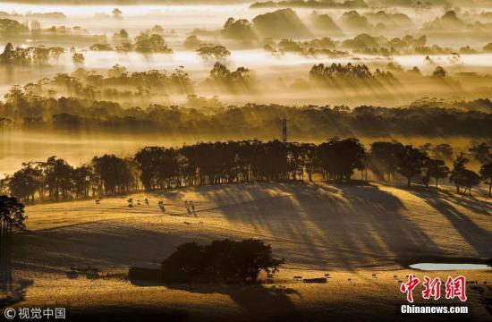 6月的维多利亚州巴宁扬山脉(Mount Buninyong),冬日阳光穿破层层云雾。 图片来源:视觉中国