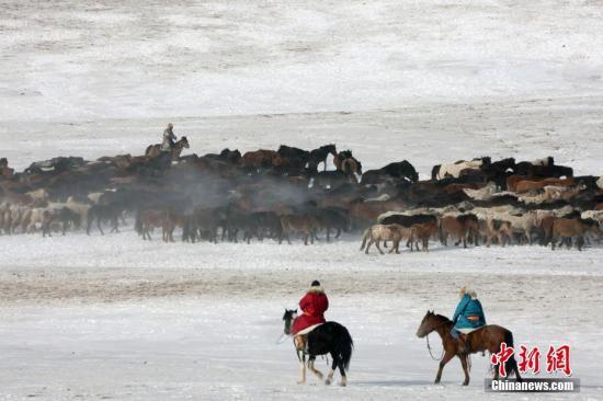 1月21日,锡林郭勒2018冰雪那达慕举行。牧场进行了驯马、套马等传统马术运动表演。记者 任海霞 摄