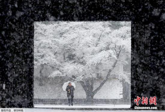 当地时间1月22日,受低气压影响,日本东部多地气温骤降,首都东京更是降下罕见大雪,市中心累积多达21厘米的积雪。图为东京民众在皇宫中赏雪。