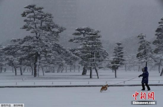 受大雪影响,东京羽田机场22日取消约250班航班,多班航班需要取消或转飞其他机场。图为东京民众在雪中遛狗。
