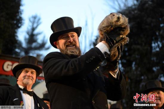 """当地时间2月2日,美国宾州旁苏托尼迎来一年一度的土拨鼠日。该节日用土拨鼠来预测春天的到来。土拔鼠如果看到自己的影子,就表明春天即将来到。今年土拨鼠""""菲尔""""预测寒冷的冬季还要持续六周。"""