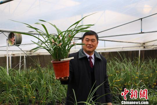 图为陈财宝展示卖价400万一盆的兰花。 林馨 摄