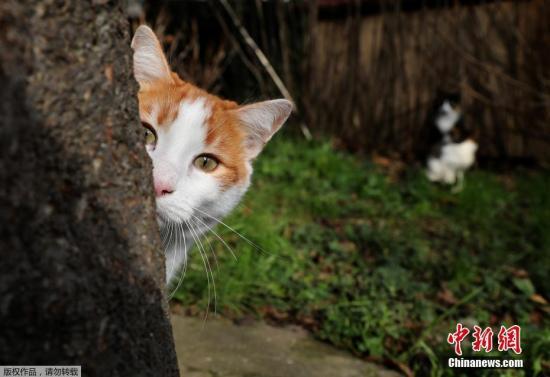 """一只猫的""""回家路"""":流浪11年,终与主人团聚……(原创)"""