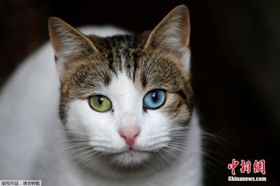 澳研究:澳大利亚部分爬行动物濒危 竟是野猫惹的祸