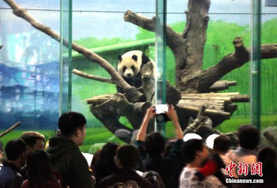 资料图:台北市立动物园大熊猫馆。 黄少华 摄